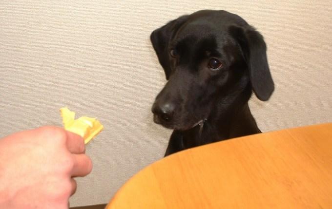 犬 アイス