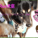 Dog Run犬庭|静岡県沼津市