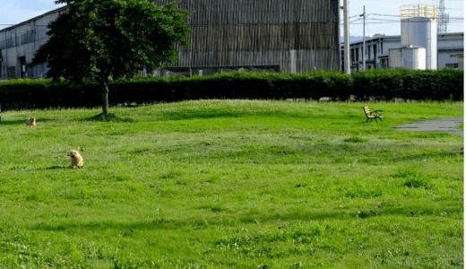 リオ西山ドッグラン|福井県鯖江市