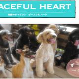 PEACEFUL HEART|熊本県阿蘇郡