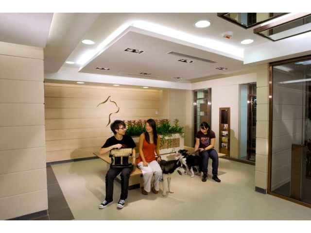 太平道寵物診所 Peace Avenue Veterinary Clinic - 旺角寵物善終, 旺角獸醫 | Zone One Zone - 寵物推介