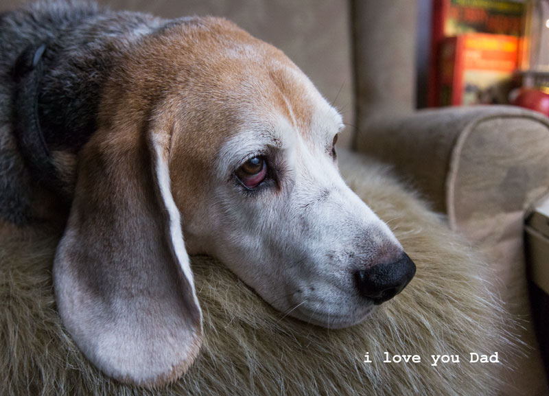 petaburtonphotography-darwin-photographer-petaburton-beagle-1