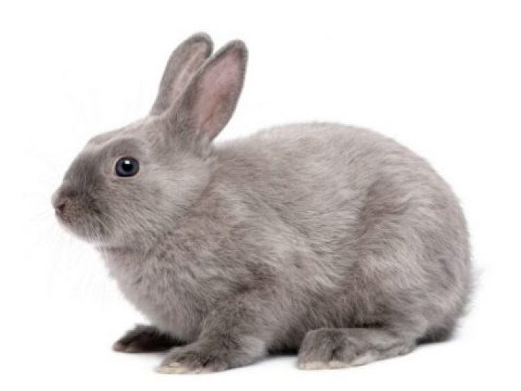 Complete Guide For Pet Rabbit Care 2021