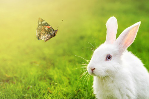 What Do Wild Rabbits Eat – Best Guide 2021