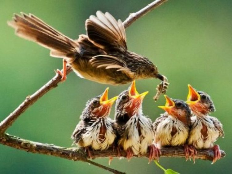 What to Feed a Baby Bird Without Feathers?
