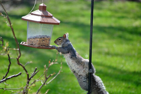 Best Guide How to Squirrel Proof Bird Feeder 2021