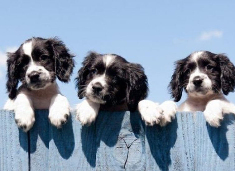 How to Keep a Dog from Jumping and Climbing the Fence: Ultimate Guide