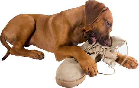 How to stop dogs from chewing their dog beds?