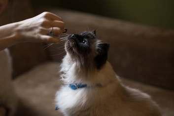 cat taking a treat.jpeg