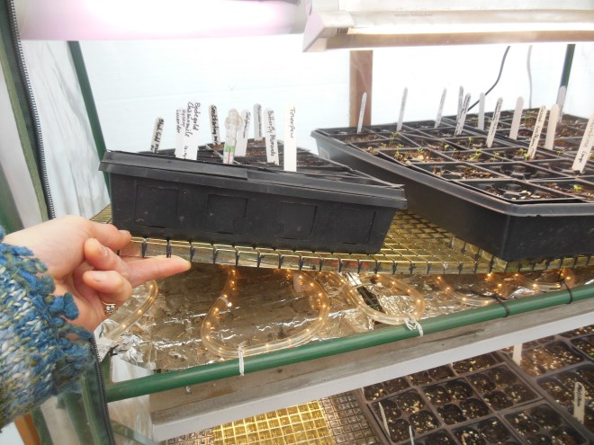 picture of rope lights under seed trays