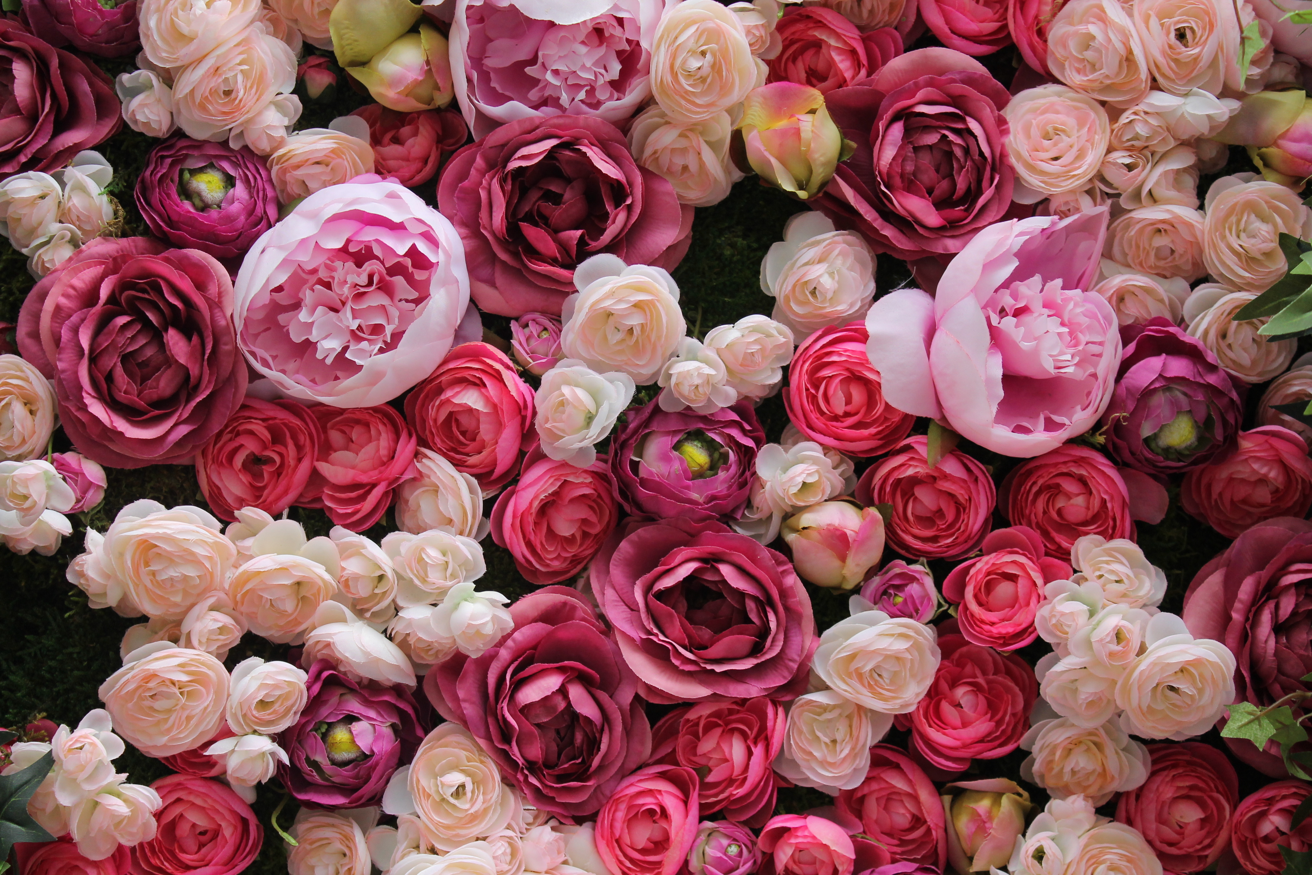 a variety of different roses and ranunculus in shades of pink