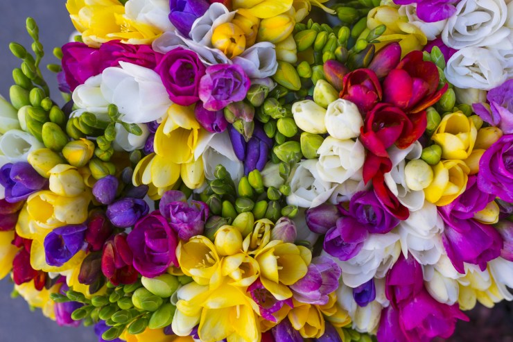 colorful bouquet of freesia photographed from above