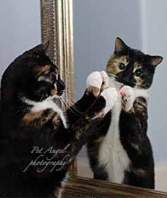 Pet Angel Santa Fe excersises cat Tammy