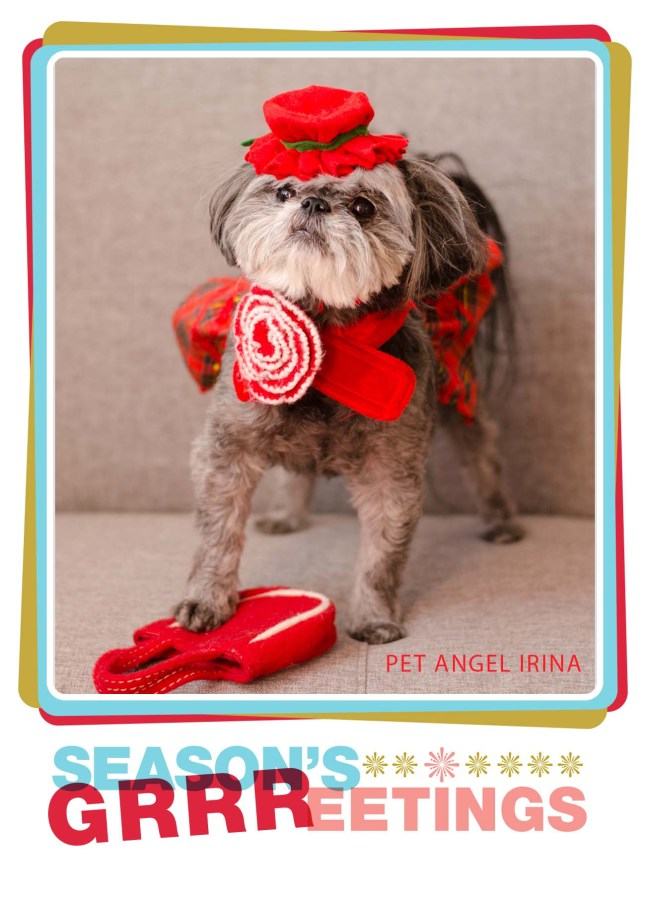 Pet Angel Santa Fe season's greetings card featured dog christmas costume photography