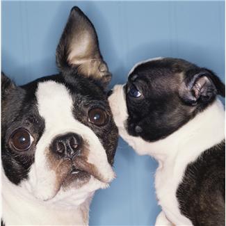 dog-secrets