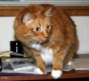 cat fear