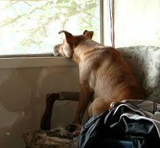 Cachorro sem atividades dentro e fora de casa é um cachorro entediado. E cachorro entediado = destruição.