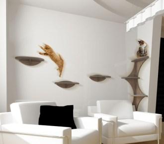 cat-shelf2