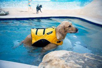 dog-pool_1941722i