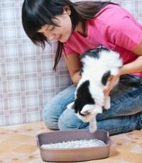 qual a areia ideal para seu gato?