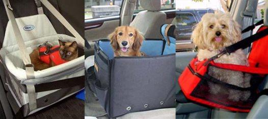 como transportar meu cachorro no carro2