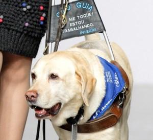 Cachorros em serviço, como os cães-guia, têm acesso livre a cabine e podem ficar perto dos seus tutores, mas eles precisam dos mesmos comprovantes veterinários exigidos para cães normais.