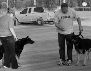 Nunca force a aproximação: seu cachorro tem o tempo dele e tudo dará certo se você respeitar isso.