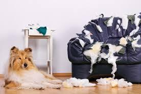 De amante de pets para amante de cachorros: deixá-los sozinhos NUNCA é a melhor opção
