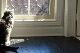 Gatos estão 100000000x mais propensos para terem estresse ao se mudar de um ambiente para outro do que os cachorros.