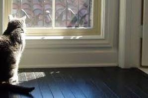 Posso deixar meu gato sozinho quando for viajar?