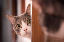 o-que-fazer-com-meu-gato-quando-for-viajar