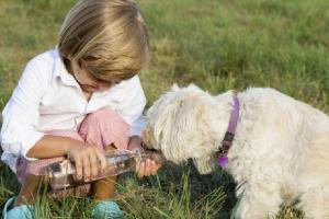 A nova lei tonar realidade a necessidade dos morados de POA que têm cachorros: um lugar só para seus pets.