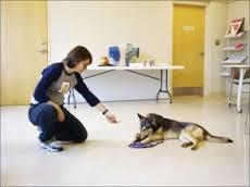 É super importante que você vá se aproximando aos poucos e sempre oferecer um petisco que seu cachorro goste muito.