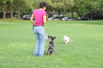 ensinar o cachorro a sentar'