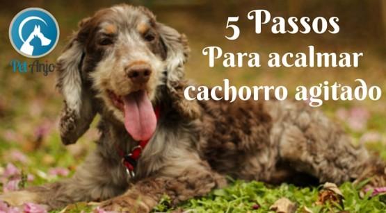5 passos para acalmar cachorro agitado