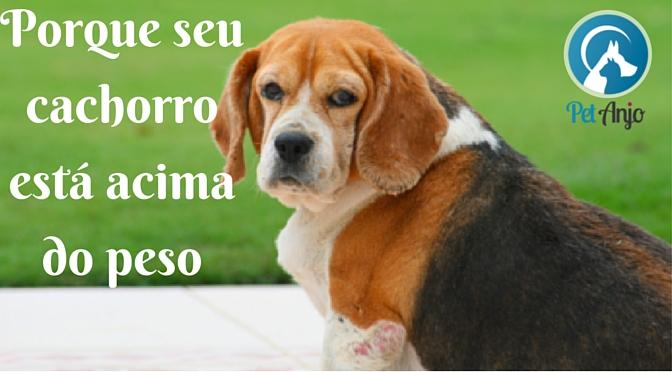 Cachorro gordo - Como emagrecer.