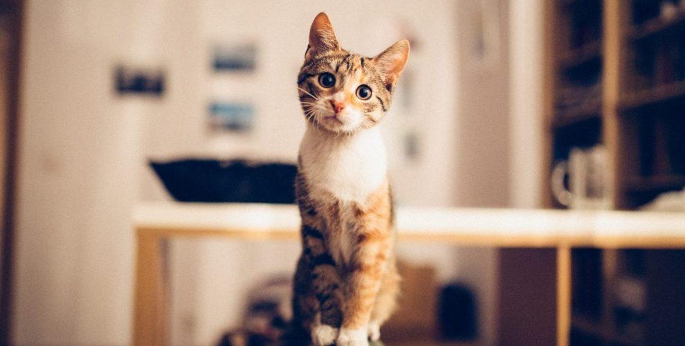 pet-sitter-cuida-de-gato-e-cachorro-m-sua-casa