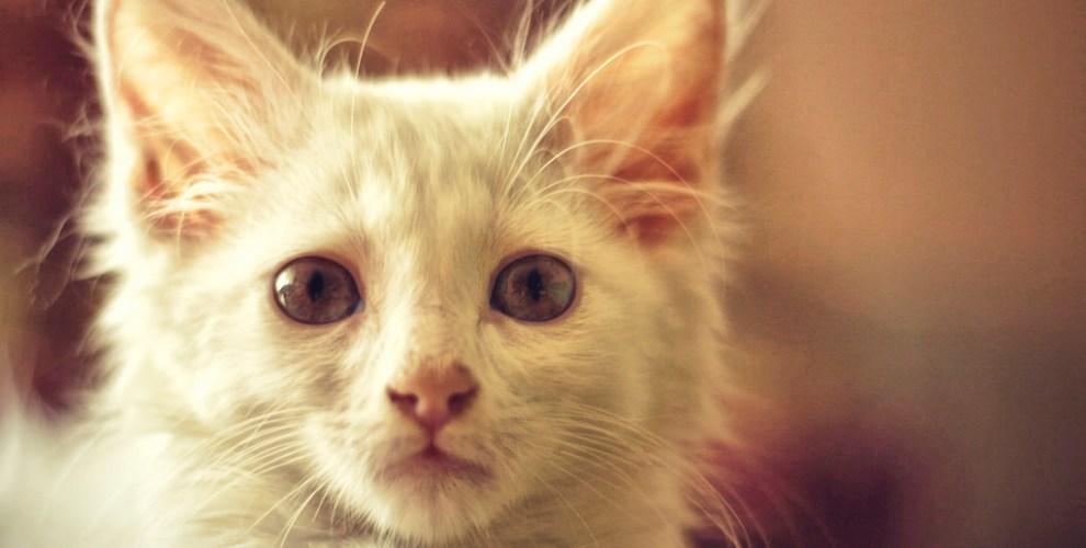 Como cuidar de gatos recém nascidos