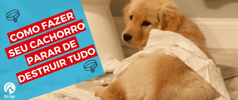 dog walker thumbnail como fazer seu cachorro parar de destruir tudo
