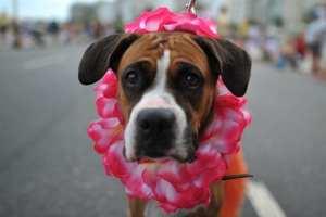 pode levar cachorro no carnaval