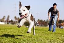 acalmando cachorro muito agitado