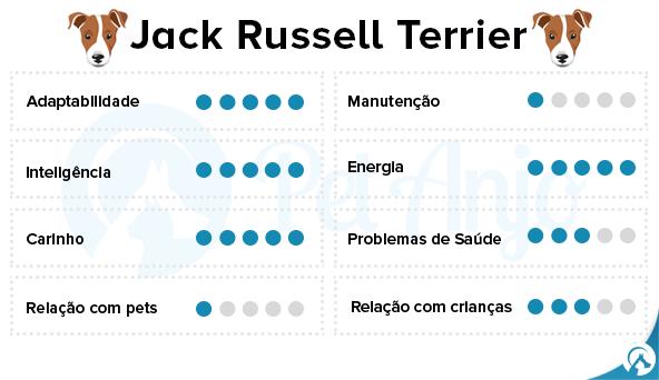jack russell caracteristicas