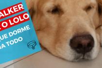 dog-walker-ajuda-cachorro-que-dorme-dia-todo-em-casa