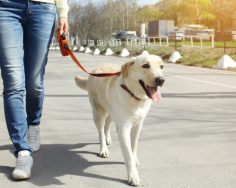 dog walker cachorro usando guia