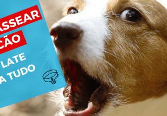 dog walker como passear com cães que latem para tudo