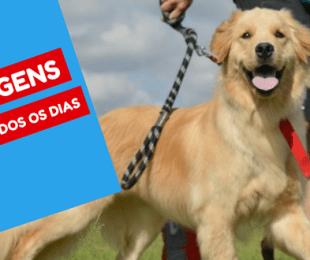 dog walker vantagem do cão passear todos os dias