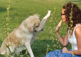 dog walker cao atendendo chamado