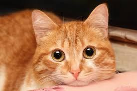cat sitter gatos