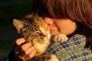 cat sitter amantes de gatos