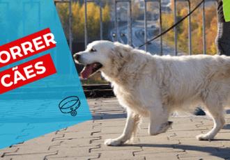 dog walker thumbnail como correr com caes